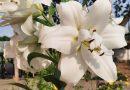 """Fotoizstāde """"Vasaras ziedi manā dārzā"""""""